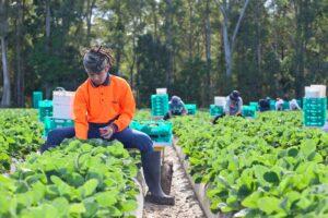 Picking at Ashbern Farms